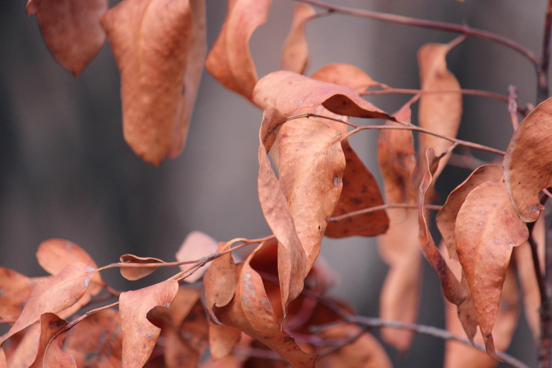 burnt leaves 2